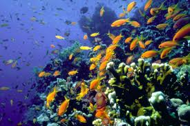 More underwater beauty in Eilat