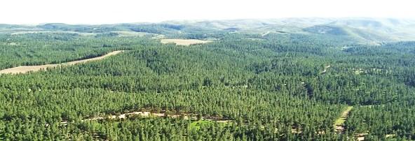 The huge, unbelievable, KKL Yatir National Forest near Beesheva (picture: Benny Mor).