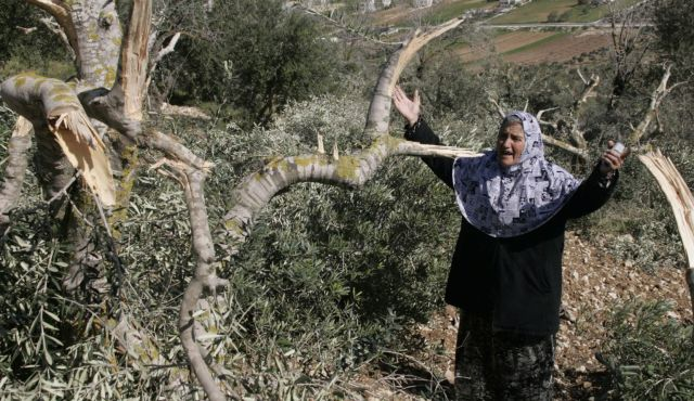 "So how does this work? First you find an old Palestinian woman. Then you take her out to an olive orchard. Then, you cut some limbs off an olive tree. And finally you pose her amidst the ""destruction"" wrought by ""evil Israelis."""