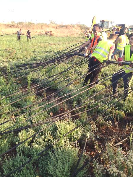 Part of 23 km of illegal irrigation piping being pulled out of land near Azzun Atma by Israeli Civil Administration workers. The theft of by Palestinians in situations like this are largely responsible for the current water shortage in Judea and Samaria.