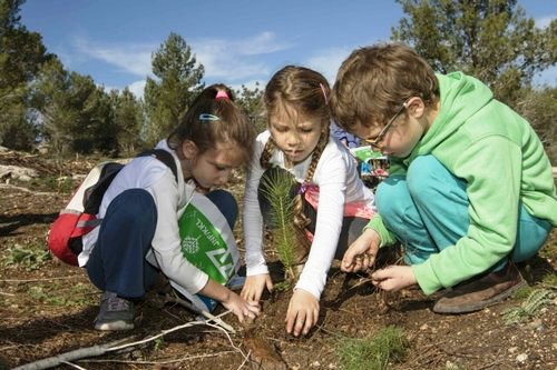 Three children planting a pine tree 5 days ago (picture Yossi Alo).