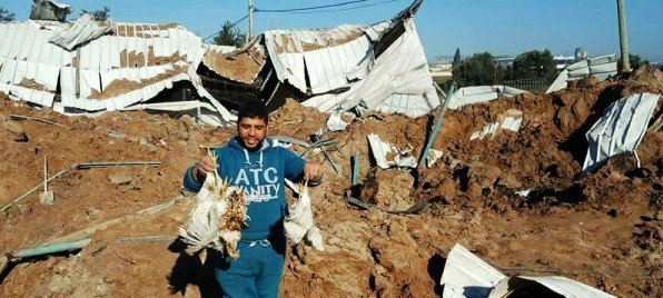 Another laughable IAF attack on Hamas. A Palestinian holds two dead chickens in front of the partially destroyed chicken house.