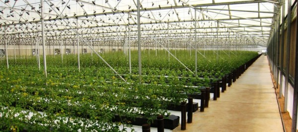Hothouse farming of vegetables with micro-irrigation on a kibbutz in Israel.