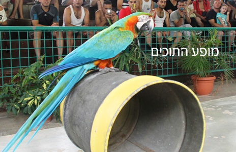 "A picture of Jacko from the Hamat Gader website. The Hebrew reads ""parrot show""."