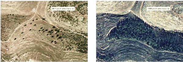 On the right, a part of the Gush Etzion forest in 1999; on the left the destroyed forest in 2017.